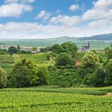 Viñedos de Reims